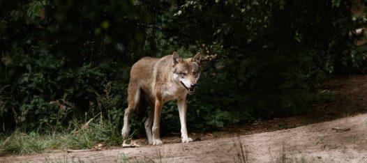 gefährliche Tiere Wildpark