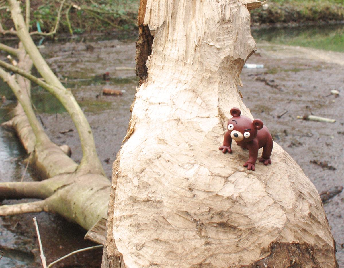 Der Wuhlebär auf abgenagtem Baumstamm