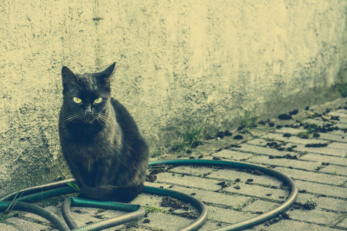 Schwarze Katze vor Hauswand mit grünem Gartenschlauch