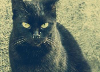schwarze Katze vor Hauswand