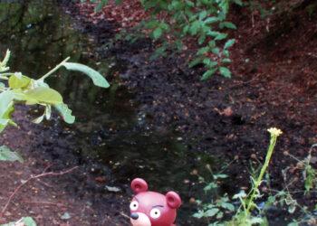 Der Wuhlebär bricht aus dem Gebüsch