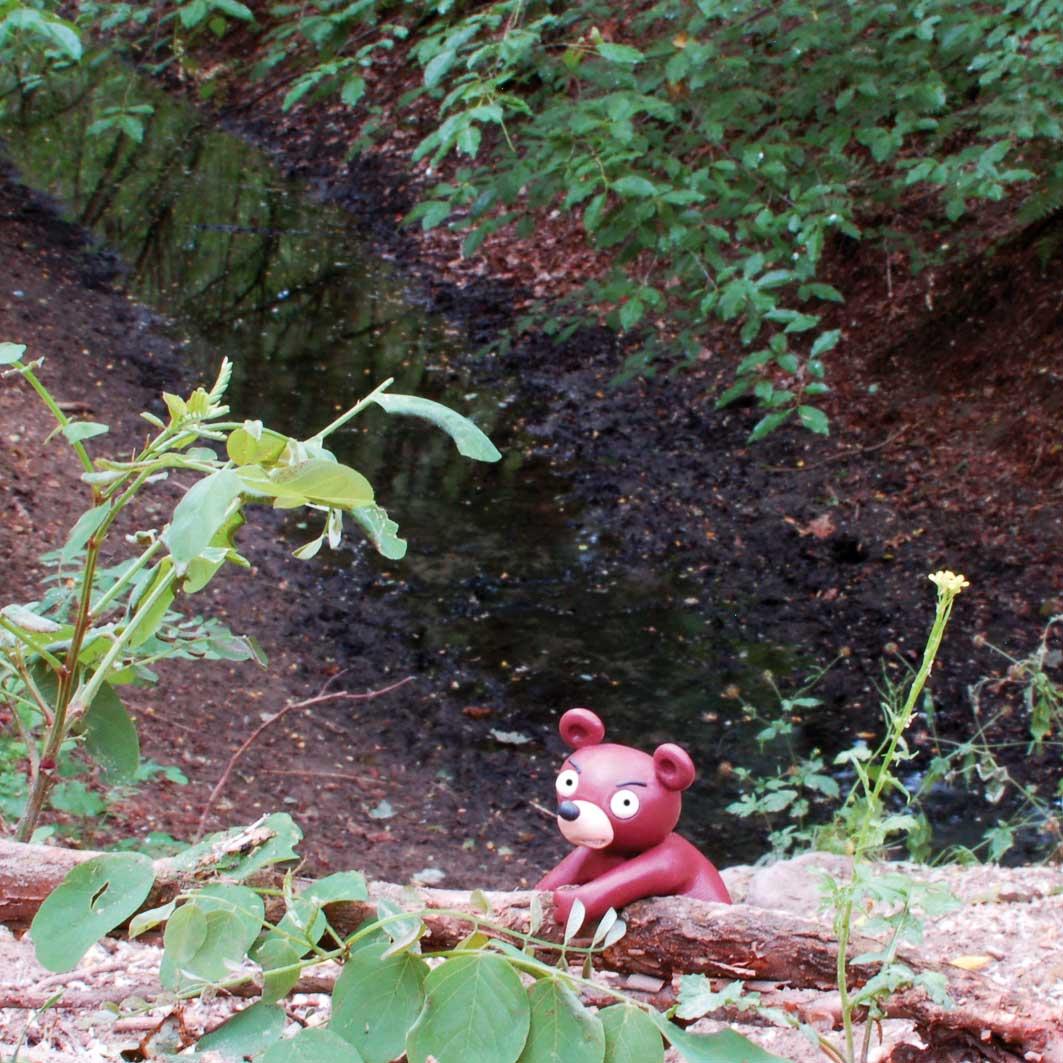 Der wilde Wuhlebär im Quellgebiet des reißenden Rinnsals