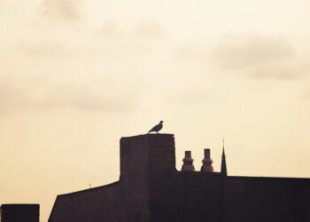 Berliner Hausdach mit Taube auf Schornstein