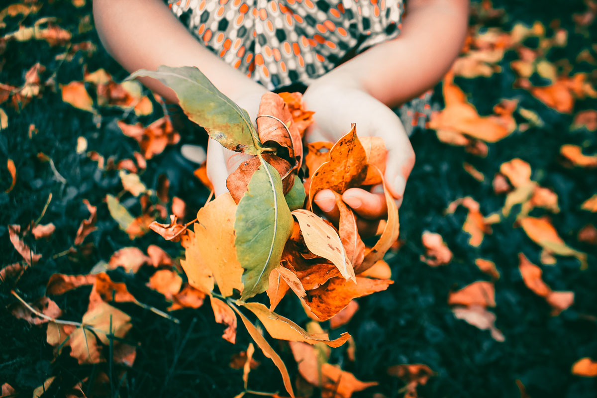 Hände halten farbiges Herbstlaub